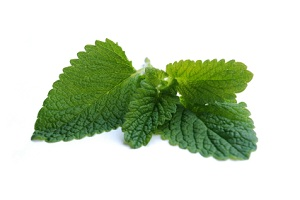 IBS Treatment - Peppermint